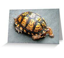Roadside turtoise Greeting Card