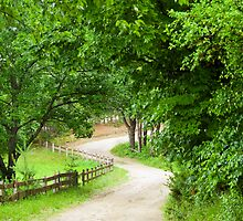 Take Me Home.....Old Country Road by Monica M. Scanlan
