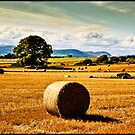 golden fields of hay, irish landscape by upthebanner