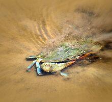 Blue Crab Hiding in the Sand by Debra Martz
