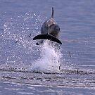 Back Splash by Martin Smart