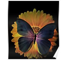 Night Butterfly... Poster