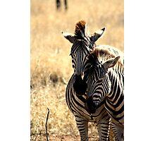 Stripes apart Photographic Print