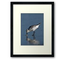 Sanderling with Sand Crab Framed Print