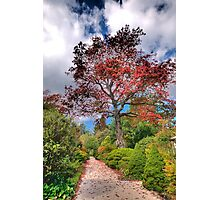 Walkway of Colour - Mount Wilson, Blue Mountains - The HDR Experience Photographic Print