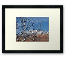 Spring Maple Tree Framed Print