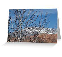 Spring Maple Tree Greeting Card