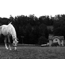 Grazing Horse in Black and White by JantraK