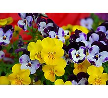 Pansies and Red Cart Photographic Print