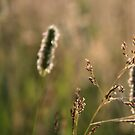 Grass by jahina