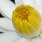 Lily by Amran Noordin