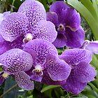 Purple Orchids by Sue Gurney