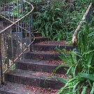 Old stairs in Audley by Rod Kashubin