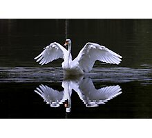 Swan and Reflection Photographic Print