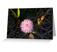 Sensitive Weed in flower Greeting Card
