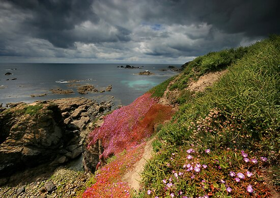 Cornwall : Flowering Lizard by Angie Latham