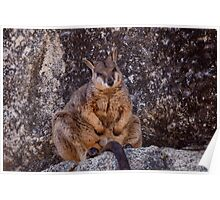 Rock Wallaby... Poster