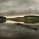 The Forrest & the Water by Bootkneck