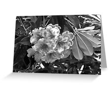 B & W Rhododendrons Greeting Card