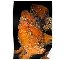 Orange Giant Frogfish Poster
