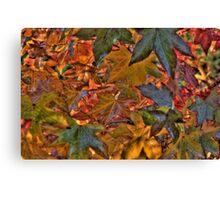 Liquidambar Leaves Canvas Print