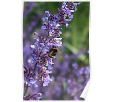 Bee catching pollen Poster