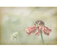 Blooming Photographic Print