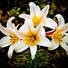 A Spray of Lillies by Mark Wilson