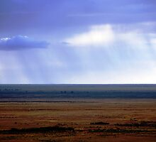The Rain Falls Mainly on the Plains by Patricia  Knowles
