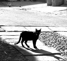 Black cat in black and white by CiaoBella