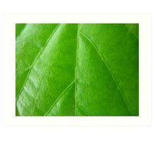 Rich shiny leaf Art Print