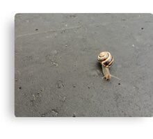 The Cunning Snail Canvas Print