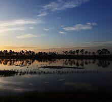 stillness of swamp by kathy s gillentine