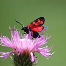 Red butterfly by loiteke