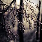 Inverno III by Joanne Ho