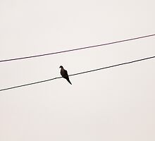 Bird on a Wire by Modified