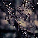 Inverno VI by Joanne Ho