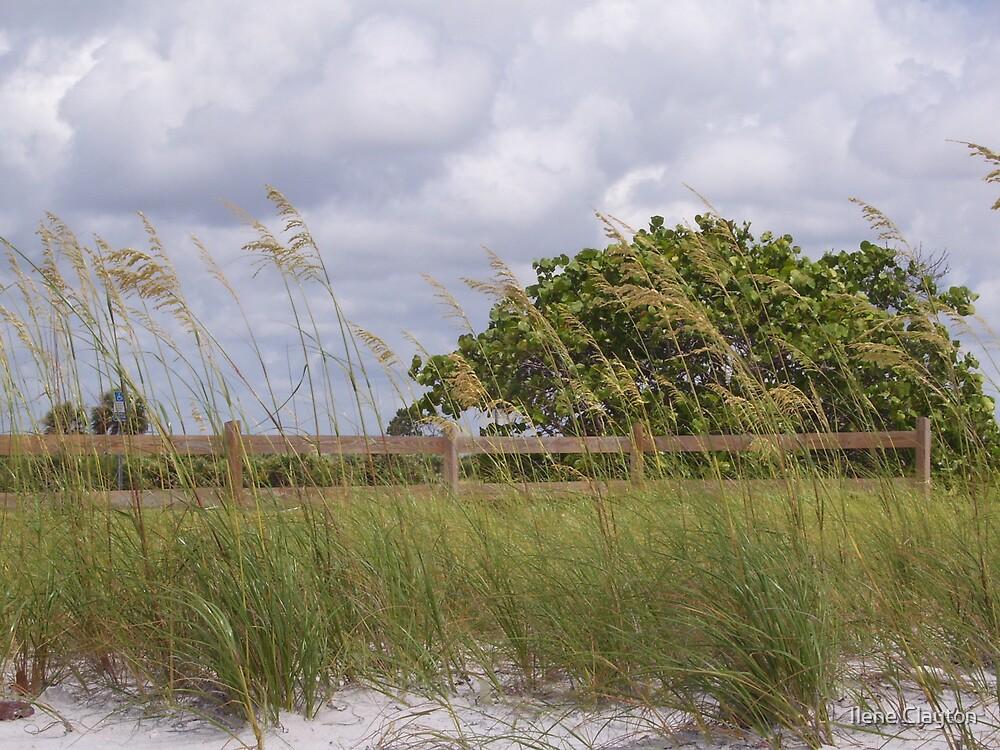 Honeymoon Island by Ilene Clayton