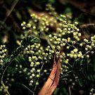 Cluster by Joanne Ho