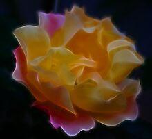 Unfolding Love by laureenr