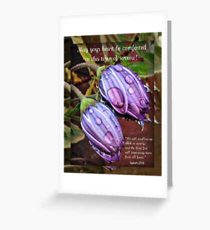 Bereavement Card with Cape Daisies Greeting Card