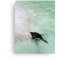 penguin diving Canvas Print