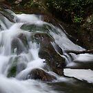 Woodland Stream by Sherri Hamilton