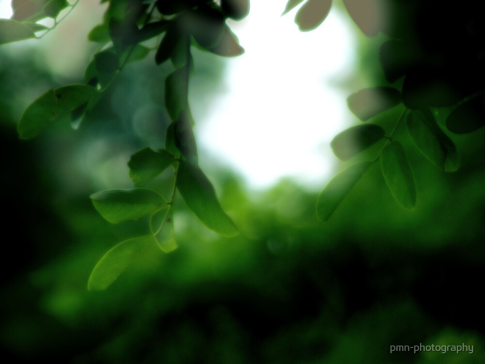 Into the Light by pmn-photography