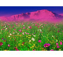 Springtime in the Rockies Photographic Print