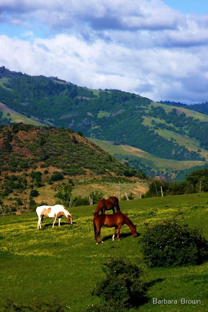 Oregon Countryside by Barbara  Brown