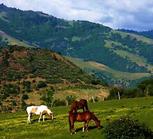 Oregon Countryside by Barbara  Brown