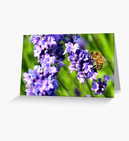 Dont Bother Me - I'm Busy Greeting Card