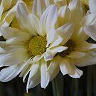 Birthday Flowers by UrsulaDee
