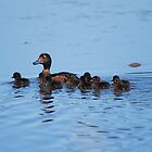 Mrs Tufted Duck and Family! by dougie1